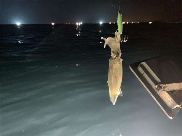 夜钓吹筒-深圳夜钓吹筒的价格和时间-夜